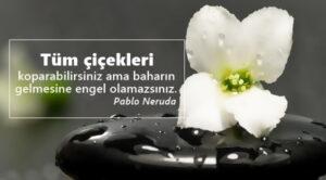 Çiçekle ilgili sözler